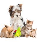 PET CARE EDUCATION